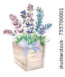 watercolor lavender flowers in... | Shutterstock . vector #755700001