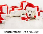 new year dog with present gift  ... | Shutterstock . vector #755703859