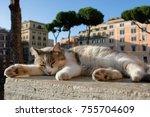 Calico Shelter Cat Sleeping...