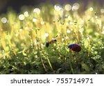 Mirages.beetle Ladybug Crawlin...