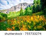 Flowers along the path Colorado Mountain Landscape Colorado Rocky Mountains in the San Juan Mountain Range in the Colorful Colorado Wilderness - stock photo