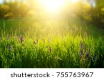 abstract natural backgrounds... | Shutterstock . vector #755763967