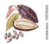 set of botanical illustration.... | Shutterstock . vector #755792341