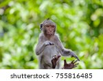 a cute monkey lives in a... | Shutterstock . vector #755816485