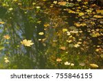 Surface Of The Pond With Falle...