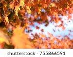 autumn maple momiji leaf in... | Shutterstock . vector #755866591