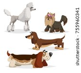 cartoon purebred dogs set.... | Shutterstock .eps vector #755960341
