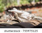 Stock photo two cats fighting on a roof 755975125