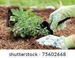A Gardener's Gloved Hand...