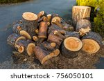 pine wood logs from one pine... | Shutterstock . vector #756050101