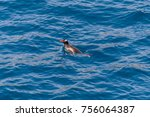 gentoo penguins swimming | Shutterstock . vector #756064387