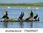 great cormorants on a log | Shutterstock . vector #75609007