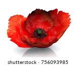 Flower Of Poppy 3d Illustration