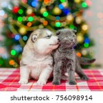 The Puppy Kisses The Kitten  O...