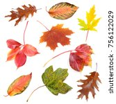 Collection Of Fallen Leaves On...