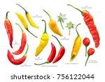 aji chilly peppers  capsicum... | Shutterstock . vector #756122044