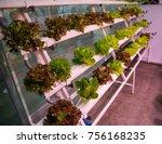 vertical hydroponic gardening... | Shutterstock . vector #756168235
