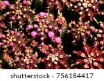 there is a cactus flower | Shutterstock . vector #756184417