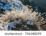 close up fluffy plant covered...   Shutterstock . vector #756188299