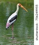 painted stork in green water... | Shutterstock . vector #756249955