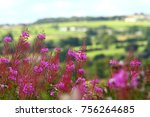rose bay willow herb flowers | Shutterstock . vector #756264685