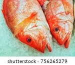 Small photo of Monochrome tones. close up. Fresh red fish head section on ice at Super Market.