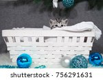 Stock photo the kitten looks out of the basket christmas kitten in the basket christmas and new year 756291631