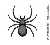 spider black arachnid on white... | Shutterstock .eps vector #756362287