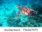 sea turtle in turquoise blue... | Shutterstock . vector #756367075