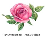 Stock photo flower roses with leaves floral watercolor illustration 756394885