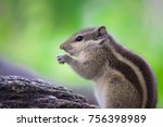 squirrels are members of the... | Shutterstock . vector #756398989