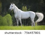 White Horse Standing On A Green ...