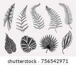tropical or exotic leaves  leaf ... | Shutterstock .eps vector #756542971