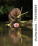 a beautiful water vole captured ... | Shutterstock . vector #756548869
