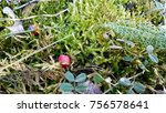 moss and small flora in spring... | Shutterstock . vector #756578641