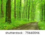 a path is in the green forest | Shutterstock . vector #75660046