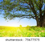 spring meadow with big tree... | Shutterstock . vector #75677575