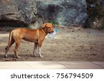 dog with plastic bottle at the... | Shutterstock . vector #756794509