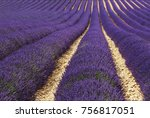 view of lavender fields  on the ...   Shutterstock . vector #756817051