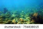 coral reef. diving. underwater...   Shutterstock . vector #756838015