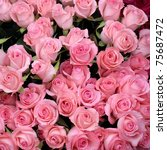 Stock photo pink roses background of my floral backgrounds series 75687472