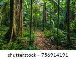 the amazon rainforest in manu...   Shutterstock . vector #756914191