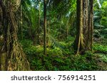 the amazon rainforest in manu... | Shutterstock . vector #756914251