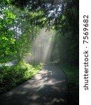 sunlight through woods | Shutterstock . vector #7569682