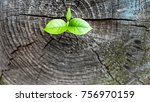 young plant growing on dead... | Shutterstock . vector #756970159