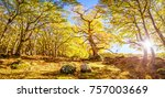the castanar de el tiemblo is a ... | Shutterstock . vector #757003669
