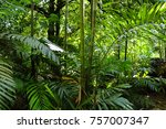 flowers of seychelles islands | Shutterstock . vector #757007347