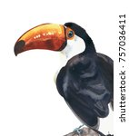 toucan tropical bird big beak... | Shutterstock . vector #757036411