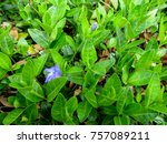 Bright Spring Background Of...