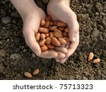 hand with peanut seeds ready to ... | Shutterstock . vector #75713323
